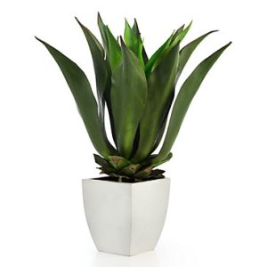 agave-bush-with-square-pot-207903999